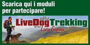 LiveDog Trekking