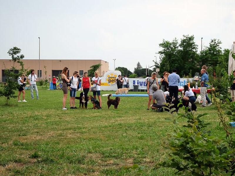Le attività LiveDog Park